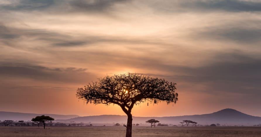 Afrika'da Çevrimiçi Kumarın Mevcut Durumu